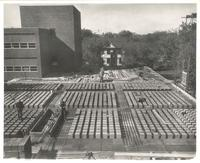 Sverdrup Hall, construction of second floor, facing west, 1954-1955.